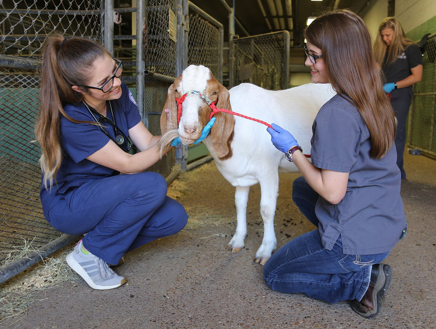 Blinn College veterinarian technology students get hands-on practice. The program has been rated the top junior college vet tech program in the state.