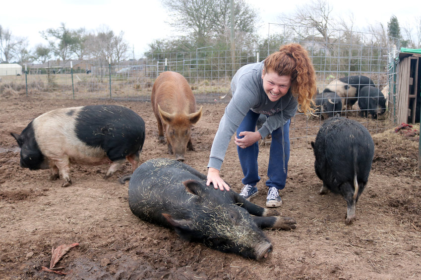 Meagan Se, founder and operator of Houston Mini Pig Rescue and Network, visits with pigs she has rescued and has living temporarily on land just outside the Sealy city limits.