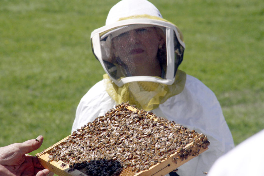 Safely handling bees can help lower your property taxes as well as being a fun family activity and providing honey for your table.