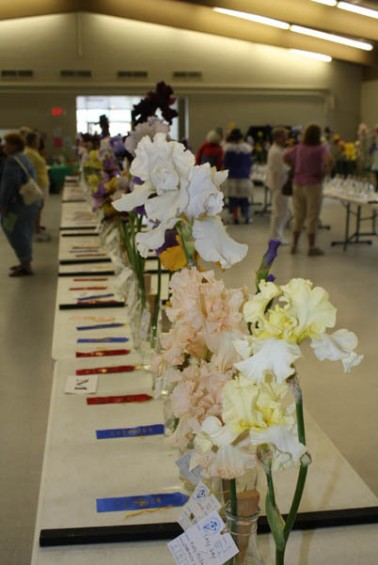 There were many flowers on display at the Iris Festival in Hale.