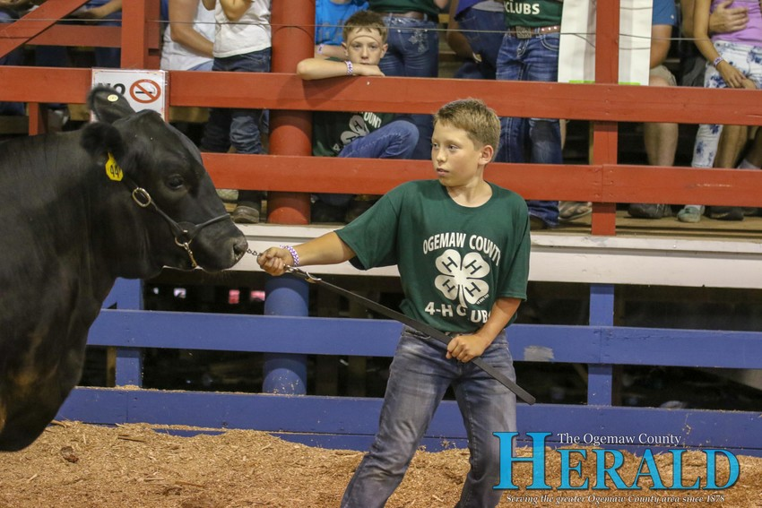Calvin Marshall does his best to move his market steer along the floor.