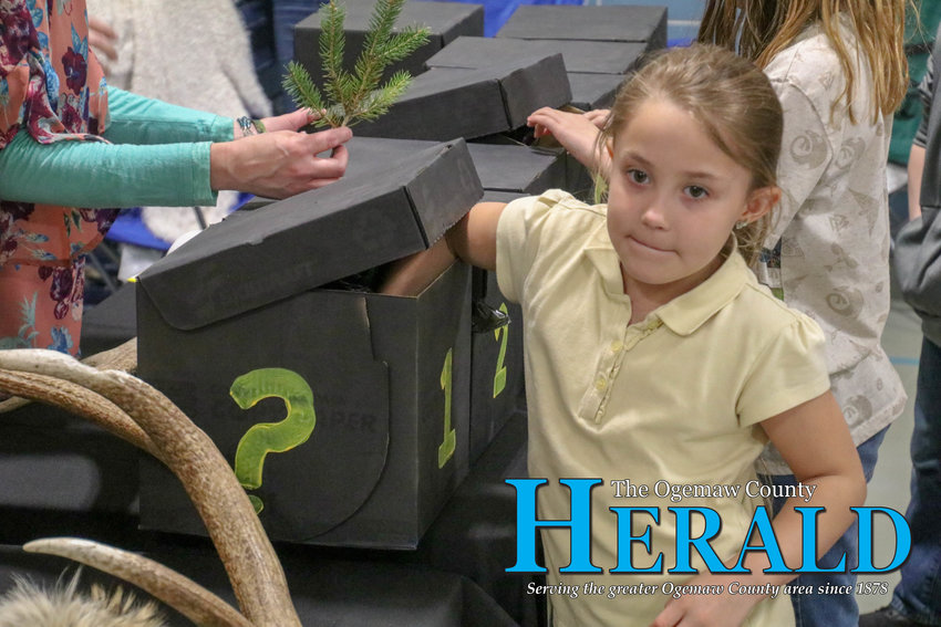 Milah O'Dell cautiously reaches her hand into a mystery box at the Ogemaw County Conservation District's table.