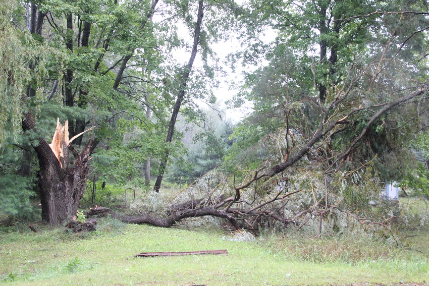 County residents could be eligible for forest damage relief following last year's storms.