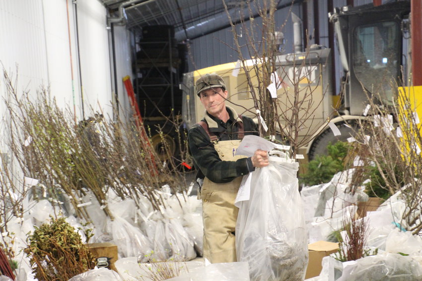 Tim Bohnhoff finds a customer's tree order and brings to the checkout table at last year's tree sale.