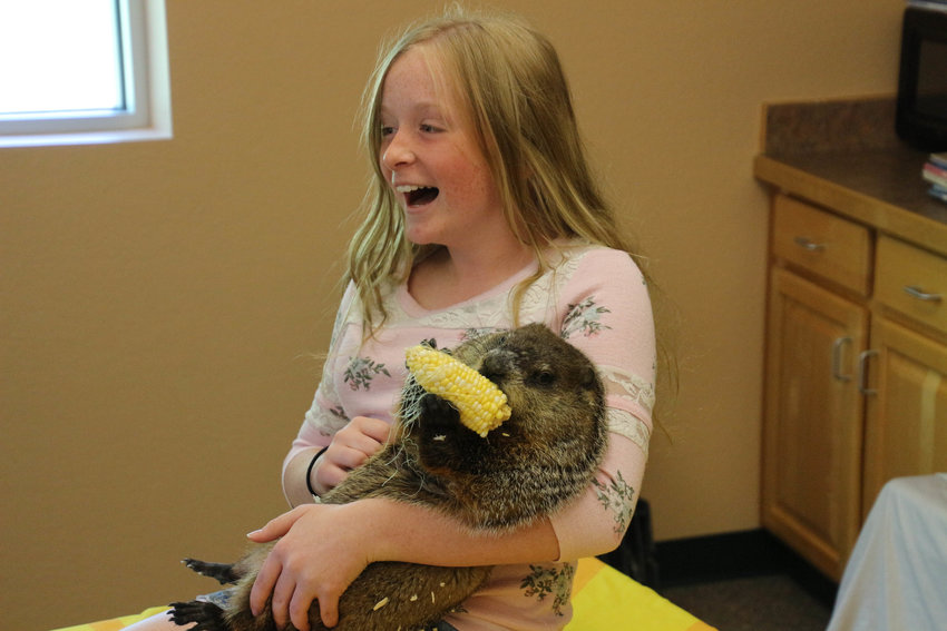 Nola Robinson, 11 at the time, laughs as Chestnut the groundhog chows down on a piece of corn on the cob at a Wildlife Safari show last year.