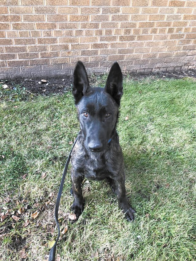 Kipp, a German shepherd currently being trained through funding from the Saginaw Valley Police Canine Association, has been selected to serve on the Ogemaw County K-9 Patrol, contingent upon successful completion of his training.