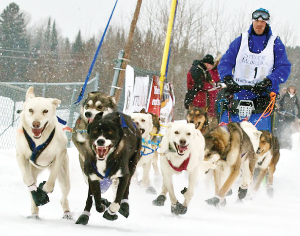 Few people will get to see the sight of sled dog racers in the upcoming WolfTrack race, as the event has reluctantly banned spectators as a result of COVID-19 restrictions.