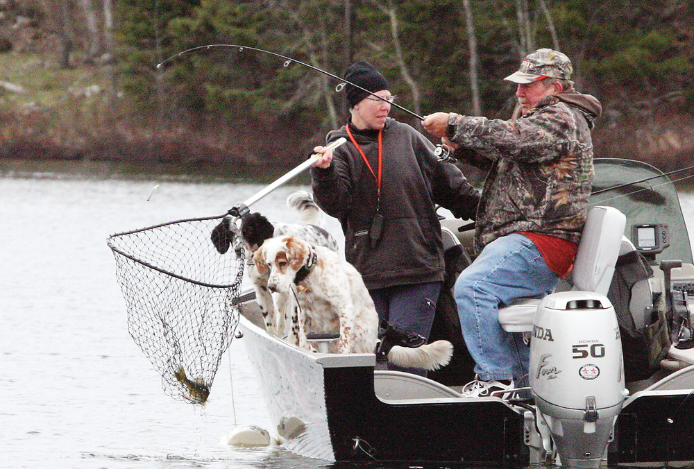 Anglers pull in a walleye on Frazer Bay while their two dogs look on in fascination.
