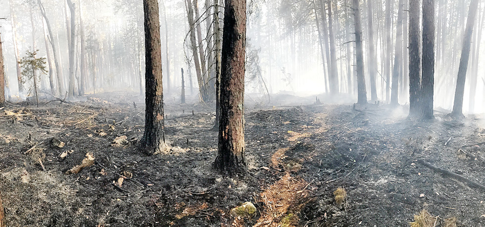 A prescribed burn near White Iron Lake to reduce hazardous fuels on Superior National Forest land was successfully completed late last week.