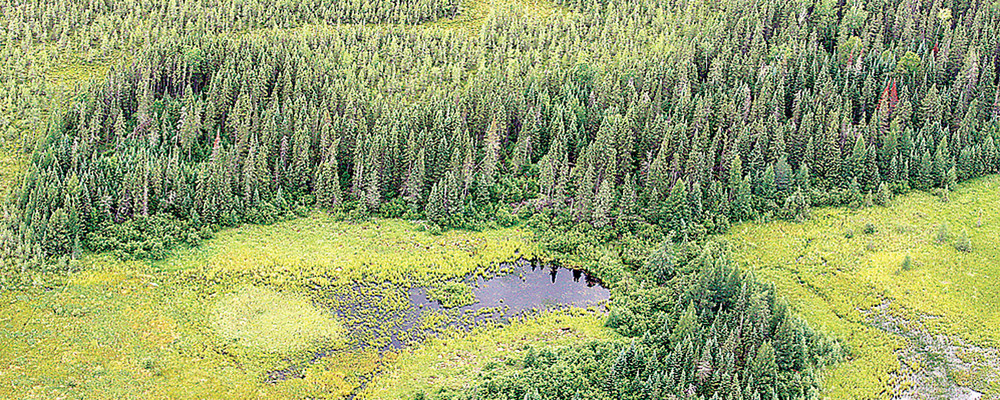 Some of the wetlands that would be sacrificed to make way for the proposed PolyMet copper-nickel mine near Hoyt Lakes. The permit issued March 21 by the Army Corps would eliminate just over 900 acres of wetlands.