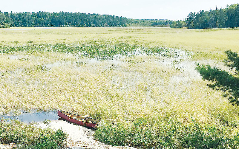 Overlooking an extensive stand of wild rice on the Vermilion River, south of Crane Lake.
