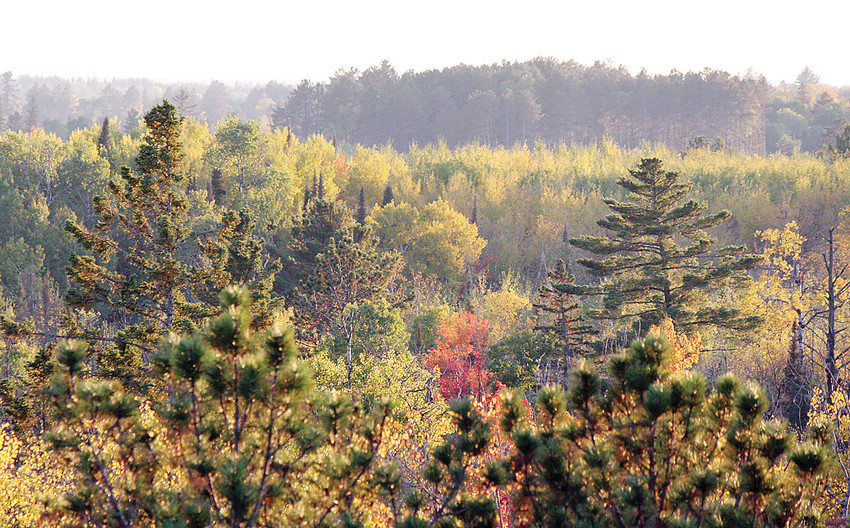 The Department of Natural Resources is proposing to increase timber harvest on state-managed lands in northern Minnesota.