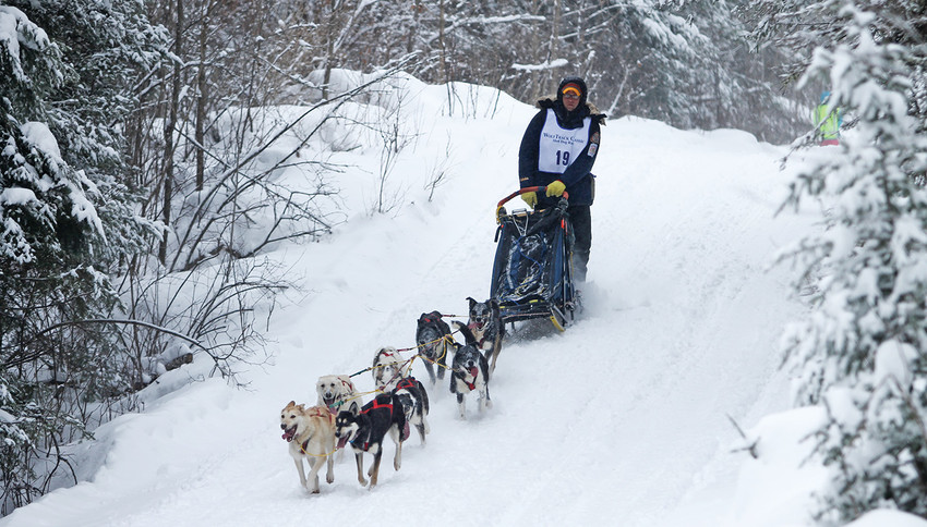 Ryan Anderson drives his eight-dog team through the woods during the 10th annual WolfTrack Classic.