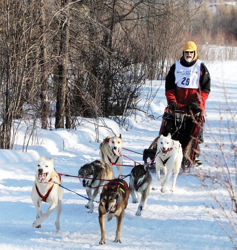 The annual WolfTrack Classic dog sled race will take place on Feb. 21 with COVID restrictions in place for entrants and spectators.