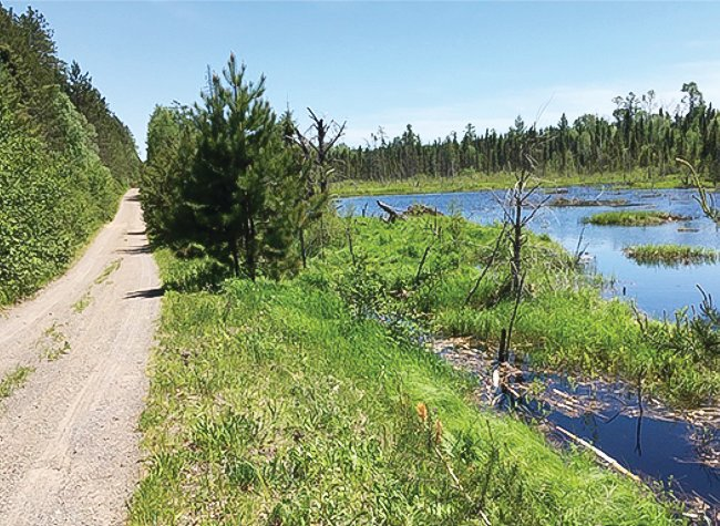 A wetland borders a trail that may be designated as part of a new border-to-border OHV trail.