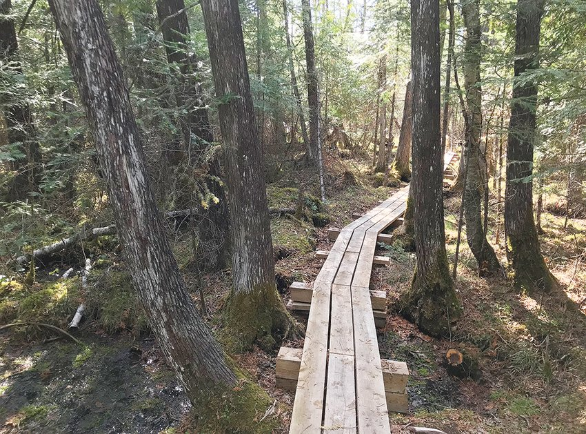 The Ancient Cedars Trail is located in Tower and features old growth white cedar dating back to about 1880.