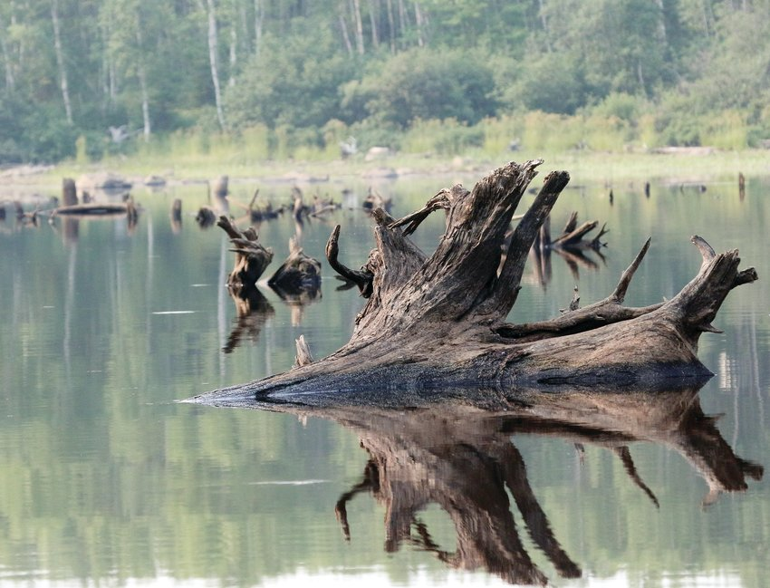 A ghost forest on the Pike River Flowage emerges from the depths as a result of low water levels.